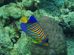 Flickr Search: ocean life | Flickr - Photo Sharing!  Maldives