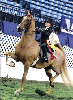 Saddleseat Equitation Zachary White and Freakness, John White Stables