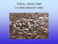 Testvériskolai Projekt Iregszemcse - Győr: A Víz Világnapja How To Dry Basil, Herbs, Herb, Medicinal Plants
