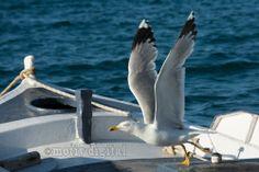 Möwe fliegt nach Ihrer Mahlzeit vom Boot.