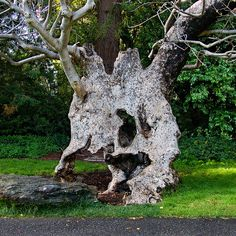 Strange Tree <3 - COULD THIS BE 2 TREES DANCING??? Look closely!