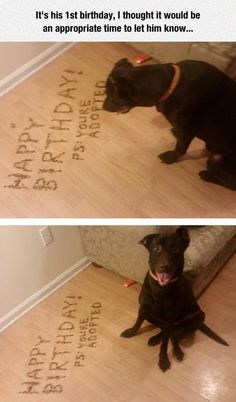 Funny dog your adopted pictures - http://jokideo.com/funny-dog-your-adopted-pictures-2/