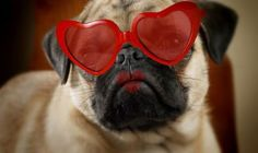 Valentine's Day Dog   Valentine's Day Gifts for Dogs that Show Them You Care » All Pet News