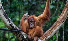 Iceland removes palm oil from all of its own-label food