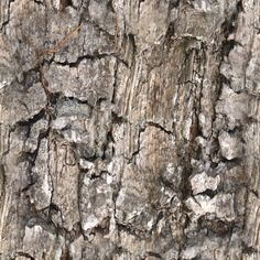 http://mirror2.cze.cz/texturesLarge/wood-texture-2.JPG