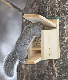 a squirrel feeder that doubles as a maze the kids would love to watch this the. Black Bedroom Furniture Sets. Home Design Ideas