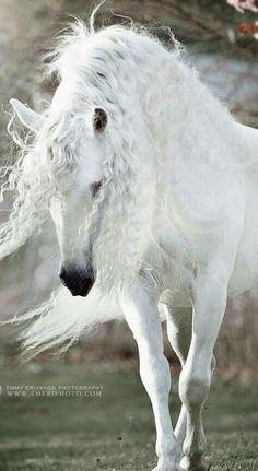 Fulfill the Fashion Forever - Goktan - Pferdefotografie - Horse Beautiful Horse Pictures, Most Beautiful Horses, All The Pretty Horses, Animals Beautiful, Cute Animals, Cute Horse Pictures, Andalusian Horse, Friesian Horse, Arabian Horses