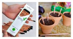 Sprouting Pencils - Once they're too short, you can plant them!
