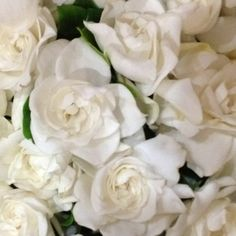 Gardenias! Accent Flowers & Gifts in Waterford, MI is the BEST florist in Oakland county for SO many reasons! Call (248) 461-6941 or visit our website www.aaflowershop.com to see what we are all about and to place your order!