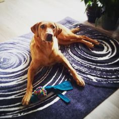 """Gefällt 57 Mal, 2 Kommentare - by Kleen-Tex (@wash_and_dry_floorfashion) auf Instagram: """"Wieder einmal unsere wunderhübsche Eby auf einem unserer wunderhübschen Designs - """"Swirl""""…"""" Frankfurt, Designs, Beach Mat, Outdoor Blanket, Instagram, Interior, Dogs, Environment, Indoor"""