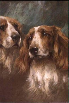 Arthur Wardle - Springer Spaniels.
