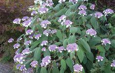 Kostenlose Fotos von Pflanzen für private oder gewerbliche Homepage #pflanzen #blumen #garten #flowers #plants #garden #pics #royaltyfree
