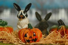 Peering bunnies from our Bunnies and Piglets TOOB photographed with a fun Halloween pumpkin by Kristie Strange.