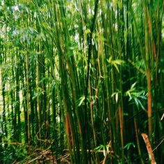 VSCO - susanneh1 - Images Vsco, Herbs, Plants, Image, Herb, Flora, Plant, Spice