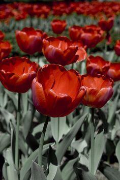 flores del Botánico by Pelayo Maojo, via Flickr