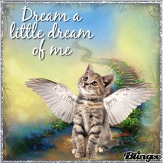 Pet Loss Quotes, Cat Quotes, Animals And Pets, Baby Animals, Cute Animals, Gato Angel, Pet Loss Grief, Pet Remembrance, Cat Memorial