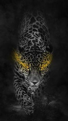 Screen Wallpaper Hd, Car Iphone Wallpaper, Tiger Wallpaper, Animal Wallpaper, Jaguar, Tiger Art, Bass Fishing Shirts, Lion Art, Art Graphique