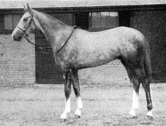 Airborne (IRE) Winner of the 1946 Derby & St Leger