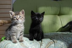 cybergata:  Hi! aren't we cute!  by zensmom1 on Flickr.