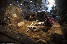 Ancient human remains from a Siberian cave dating back 50,000 years or more could provide a missing link in understanding how modern humans evolved. The excavation of the bones is shown in the picture above. Could a skull found in Siberia give new clues about human evolution? 50,000-year-old remains may be a Neanderthal or Denisovan.