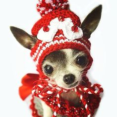 Christmas Hat !!! ♥ Yuppypup.co.uk provides the fashion conscious with stylish clothes for their dogs. Luxury dog clothes and latest season trends, Dog Carriers and Doggy Bling. Next Day Delivery. Please go to http://www.yuppypup.co.uk/