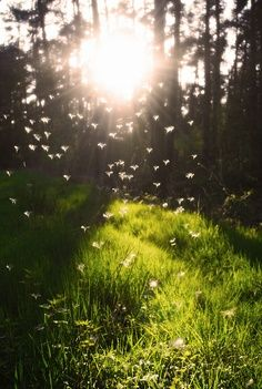 in the forest..I love this time of day in the sunlight ...magical