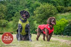 Waterproof K9 overcoats are the perfect all weather coat for your dogs. Modelled here by Max the Pointer and Lily the Cocker  http://www.packleaderdogadventures.co.uk/products/ruffwear-k-9-overcoat-utility-jacket
