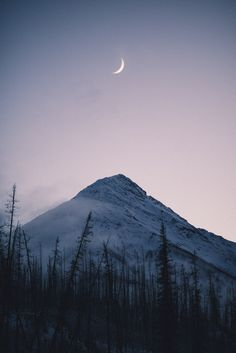 "teapalm: ""(Tasha Marie) | Crescent instagram | prints """
