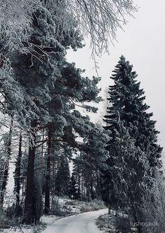 'snowy road' Spiral Notebook by lyshoseok Spiral, Notebook, Winter, Artist, Outdoor, Design, Winter Time, Outdoors, Artists