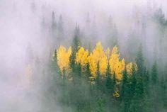 Autumn Mist Cumbres Pass, on the Colorado – New Mexico border