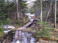 Best Nh Hikes With Dogs