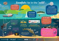 """The Deep on Twitter: """"For #WorldAnimalDay we have created this Sawfish infographic to raise awareness of these endangered animals! http://t.co/nWOrarHwtF"""""""