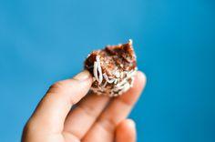 ENERGY BALLS DE CHOCOLATE Y HEMP   Cocina Vegano - Recetas Veganas