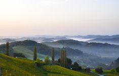 suedsteirische weinstrasse foto 01 Fotografie • We live in the Sky... Nebelschwaden an der Südsteirischen Weinstraße