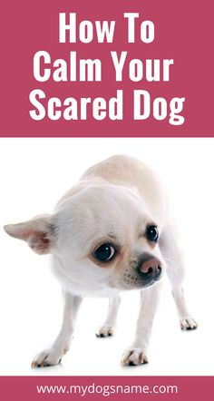 Does your dog get anxious and freaked out? Read on for tips on how to calm your scared dog. Your dog will be relaxed and happy in no time! and xenoblade x blossom, disney pets and mishkan hanefesh pdf. Dog Training Classes, Dog Training Tips, Safety Training, Training Schedule, Brain Training, Training Center, Potty Training, Xenoblade X, Dog Minding
