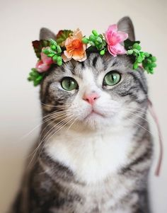 Adorable cat wearing a flower crown #flowers #adorable #cat #cute