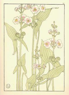 Arrowhead, Jeannie Foord, Decorative Flower Studies, 1901