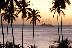 カリブ海のリゾートでハートフルな愛の誓い。