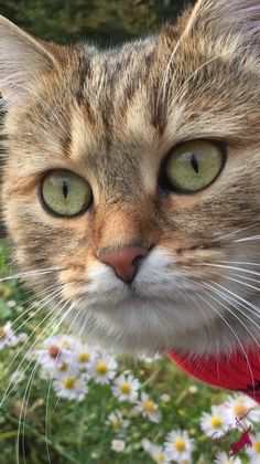 Best of Tabby Cats pictures: Puppies And Kitties, Cats And Kittens, Tabby Cats, Kitty Cats, Animals And Pets, Cute Animals, Funny Animals, Grey Kitten, Beautiful Cats