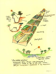 From Oregon Sustainability Centre. Slices through a landscape. Lawrence Halprin, Green Jobs, Sea Ranch, Beautiful Park, Cartography, Art And Architecture, Landscape Design, Sustainability, Oregon