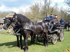 Foto's - Friese paard zuid nederland
