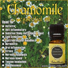 Learn all about the uses and benefits of Chamomile EO with our free guide!