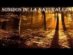 BOSQUE Y RELAX 3, SD SONIDOS DE LA NATURALEZA, SOUND OF NATURE, RELAJANTE, RELAXATION, RELAXING