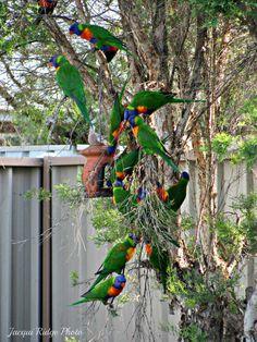 Ridge I call this in our backyard Queensland Australia, Birds Eye View, Birdhouses, The Locals, Irish, Beautiful Places, Feather, Backyard, Rainbow