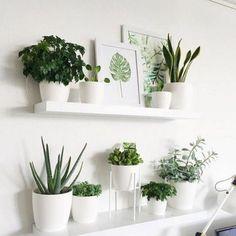 Indoor Plant Wall, Indoor Plants, Indoor Gardening, Potted Plants, Urban Gardening, Hanging Plants, Indoor Climbing Plants, Indoor Hanging Baskets, Wall Garden Indoor