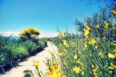 Diano Gorleri – vivere con lentezza #Liguria