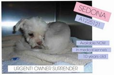 ~~Urgent~~Jurupa Valley, California Defenseless little senior Maltese surrendered to busy, overcrowded shelter.---Western Riverside City/County Animal Shelter, Monday through Friday from 11:00 a.m. 6:00 p.m. On Saturday, the facility is open from 11:00 a.m. to 5:00 p.m. For more information, call (951) 358-PETS (7387).