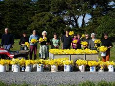 Our volunteers pick all the flowers!