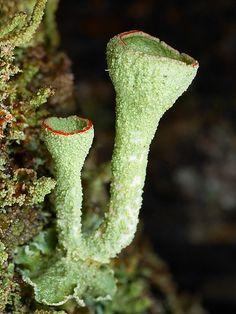 Fungi - Lichen - Stephen Axford Photography