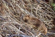 Camouflaged Creatures on MSN Photos#5